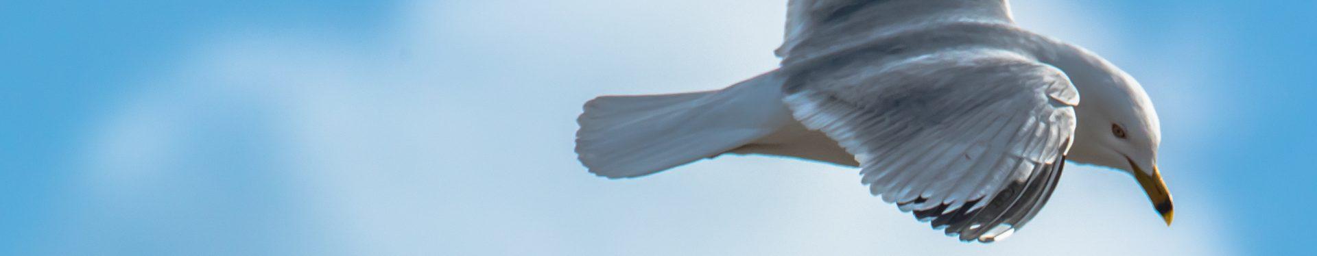 bird picture.